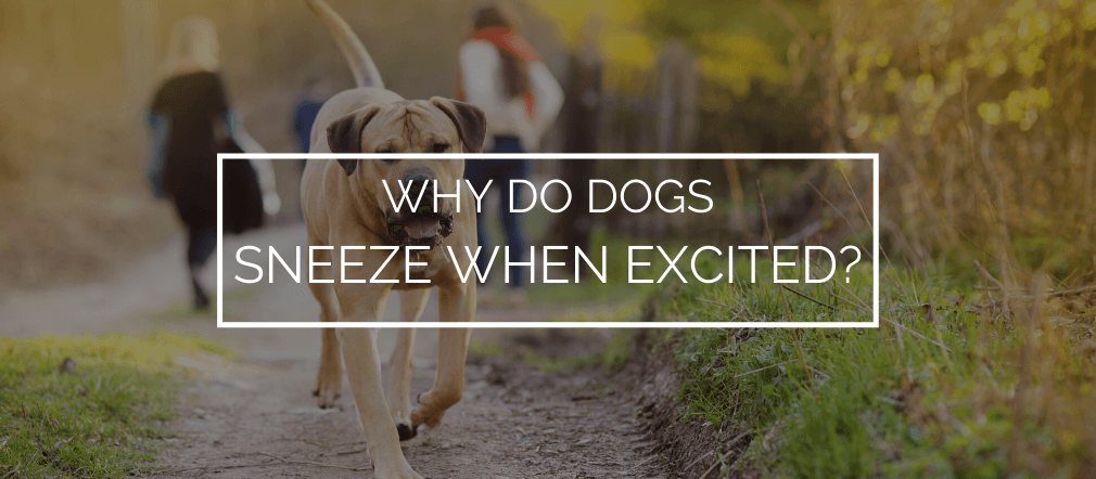 why do dogs sneeze