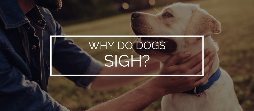 why do dogs sigh
