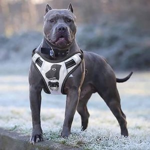 Babyltrl Silver Big Dog Harness – Best for Large Dogs