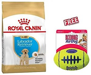 Royal Canin Labrador Retriever Puppy 12kg Dog Food for Growing Labrador Puppy 15 months with Prebiotics FREE KONG AirDog American Football with Squeaker