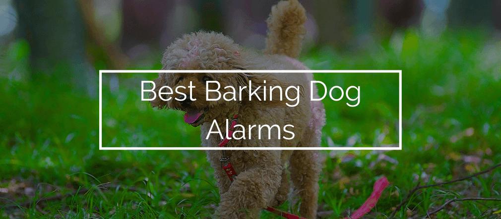 Best Barking Dog Alarms