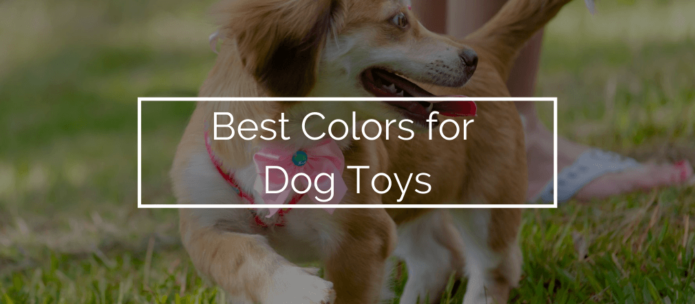 Best Colors for Dog Toys