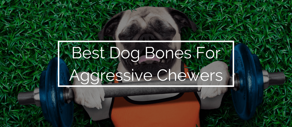 Best Dog Bones For Aggressive Chewers