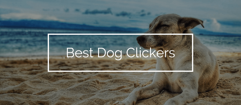 Best Dog Clickers