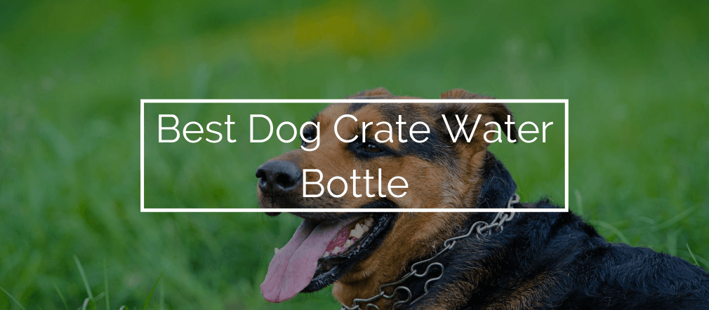 Best Dog Crate Water Bottle