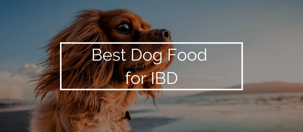 Best Dog Food for IBD
