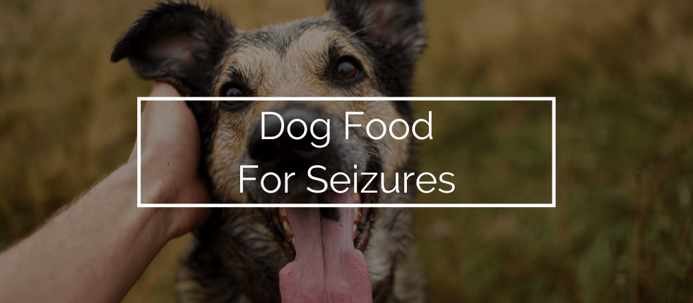 Best Dog Food for Seizures