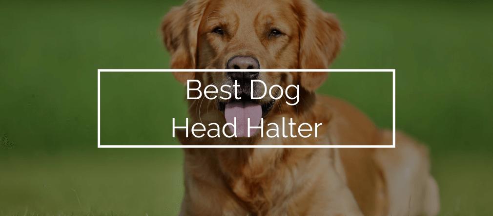 Best Dog Head Halter