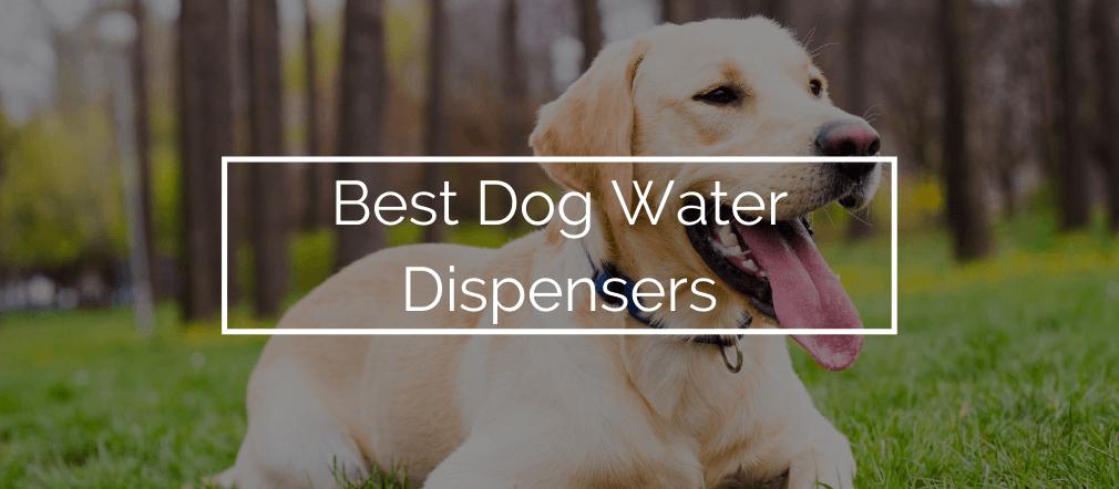 Best Dog Water Dispensers