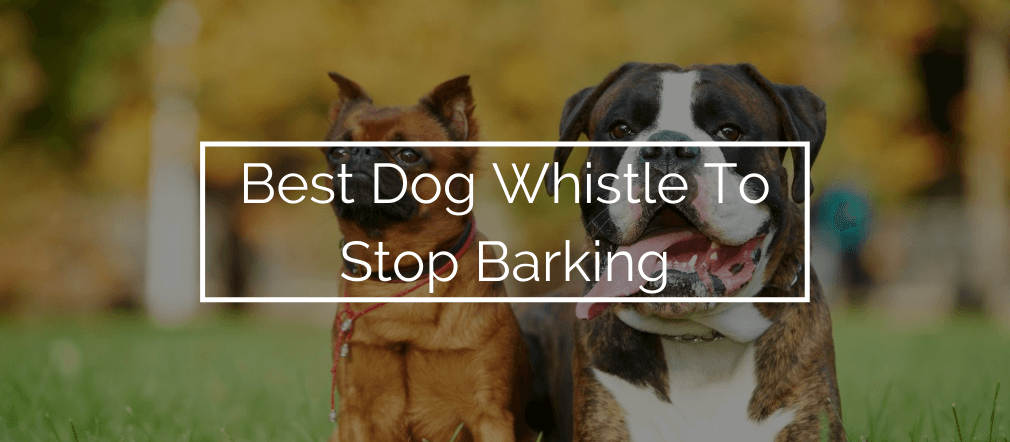 Best Dog Whistle To Stop Barking