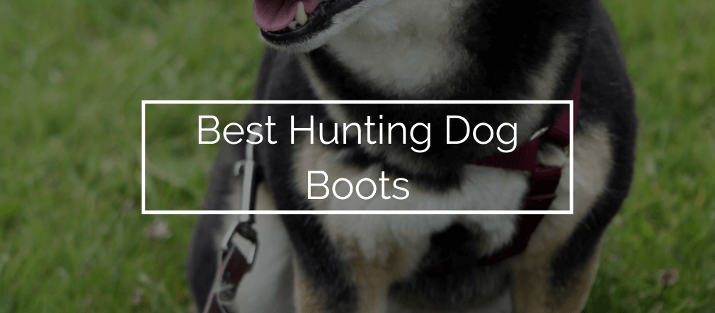 Best Hunting Dog Boots