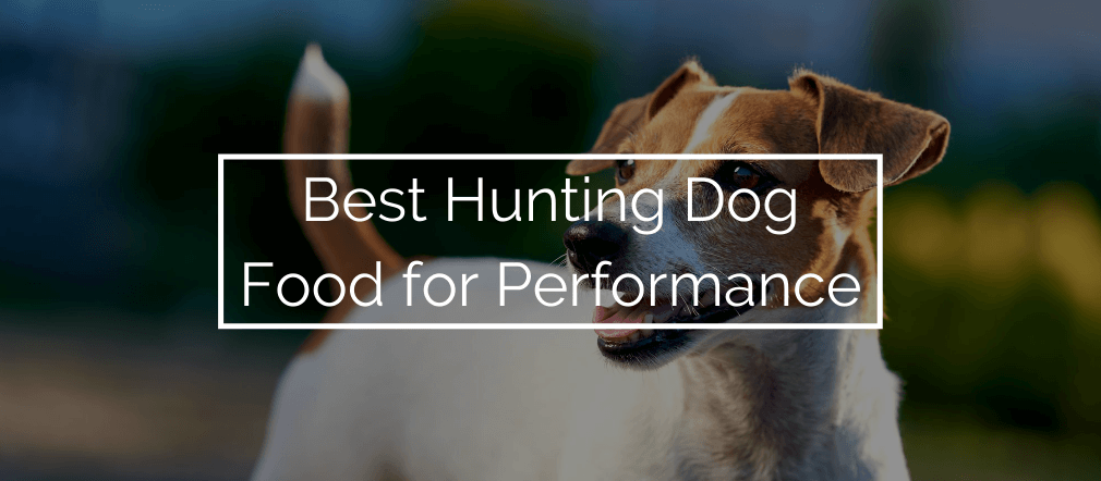 Best Hunting Dog Food for Performance