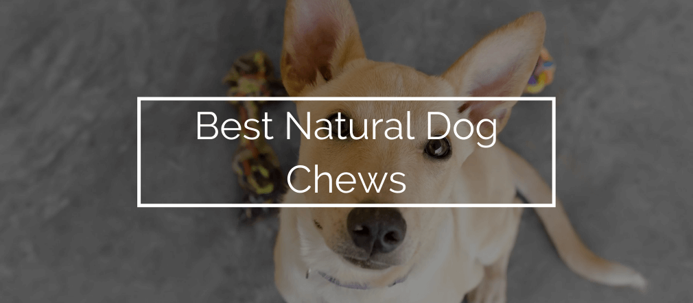 Best Natural Dog Chews