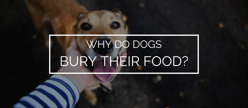 bury their food