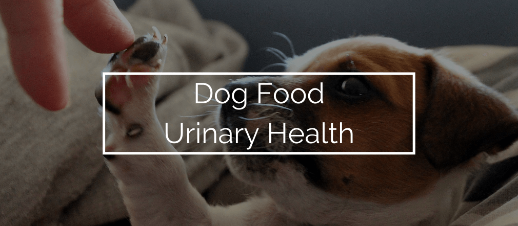 dog food for urinary health