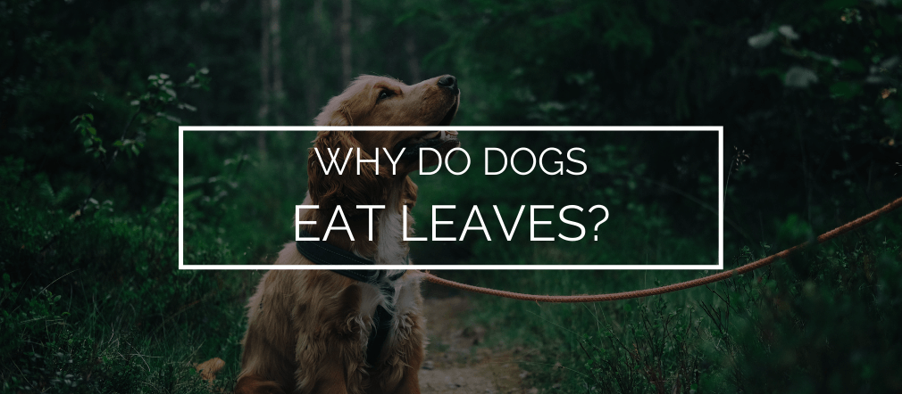 dog eat leaves