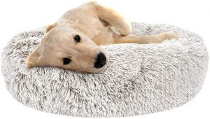 Dog Beds for Schnauzers