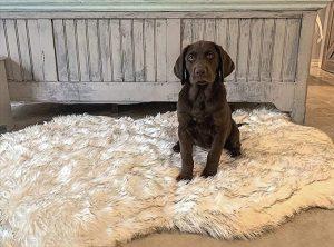 IHAPPYDOG LUXURY FAUX FOR ORTHOPEDIC DOG BED