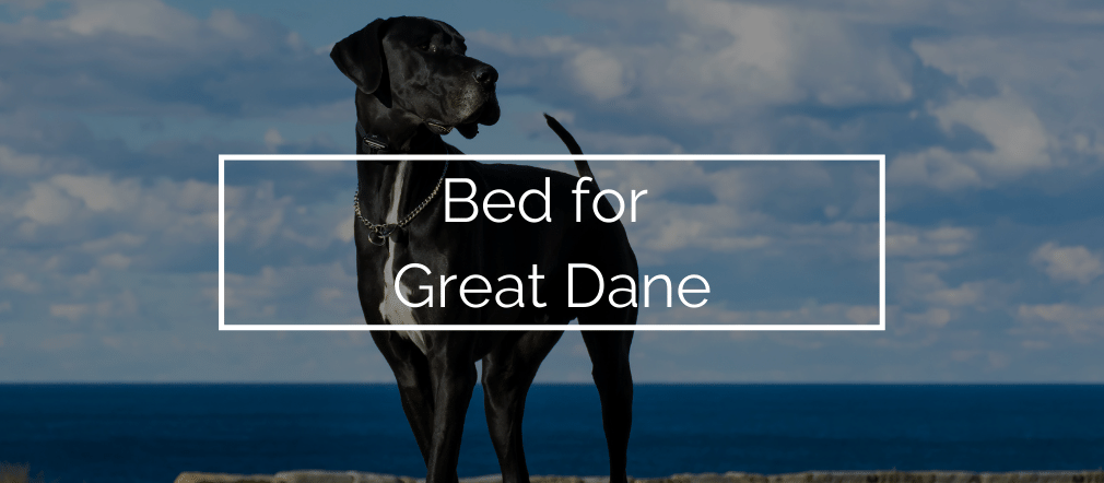 Bed for Great Dane
