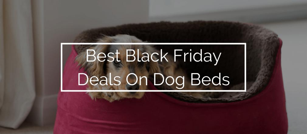 Best Black Friday Deals On Dog Beds