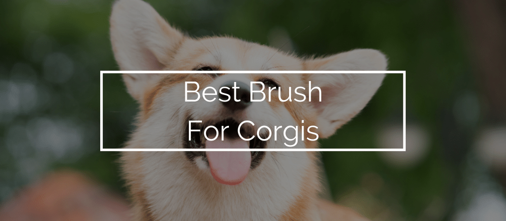 Best Brush For Corgis