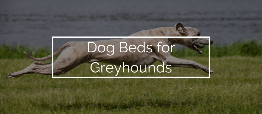 Best Dog Beds for Greyhounds