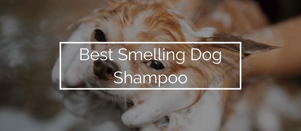 Best Smelling Dog Shampoo