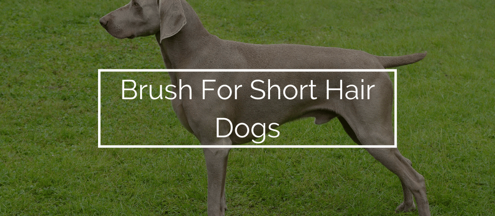 Brush For Short Hair Dogs