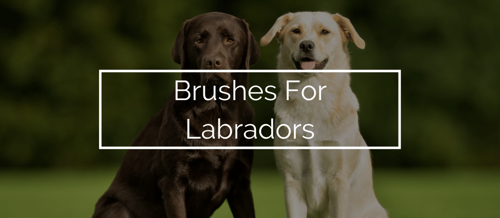 Brushes For Labradors