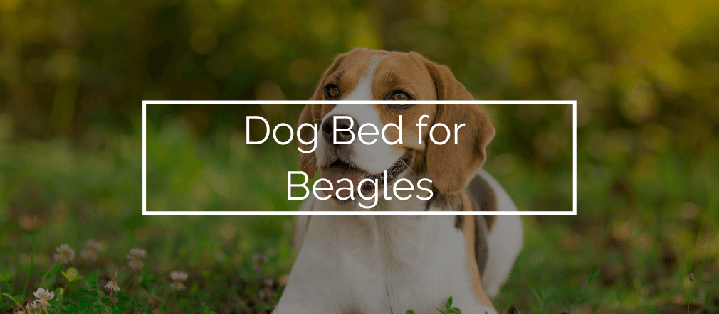 Dog Bed for Beagles