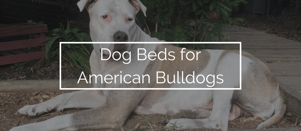 Dog Beds for American Bulldogs