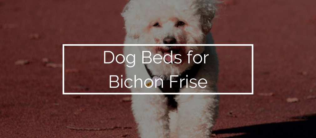 Dog Beds for Bichon Frise