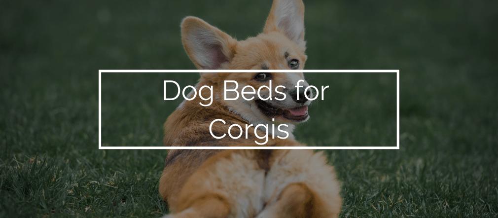 Dog Beds for Corgis