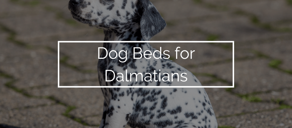 Dog Beds for Dalmatians