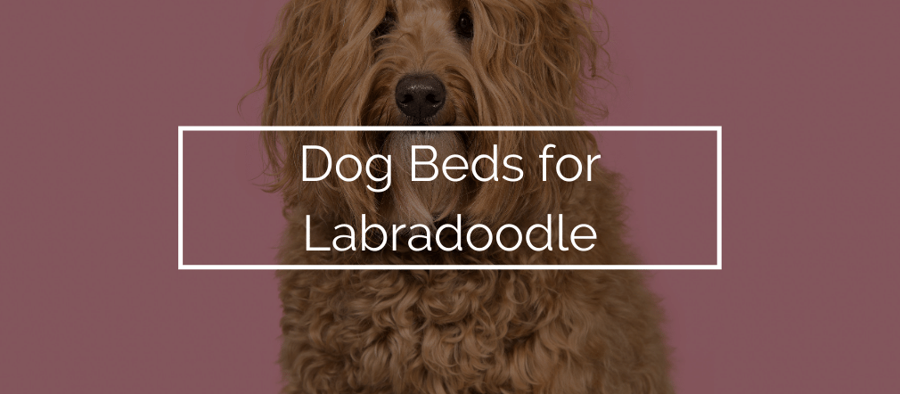 Dog Beds for Labradoodle