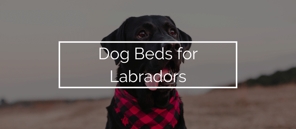 Dog Beds for Labradors