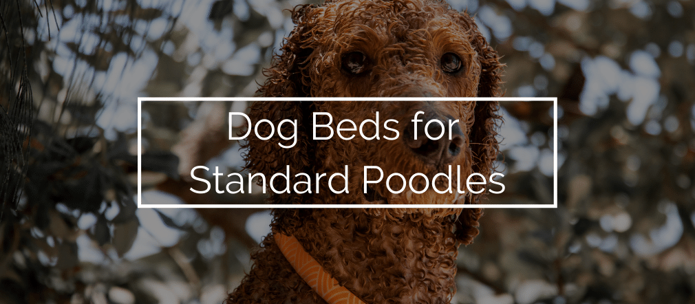 Dog Beds for Standard Poodles