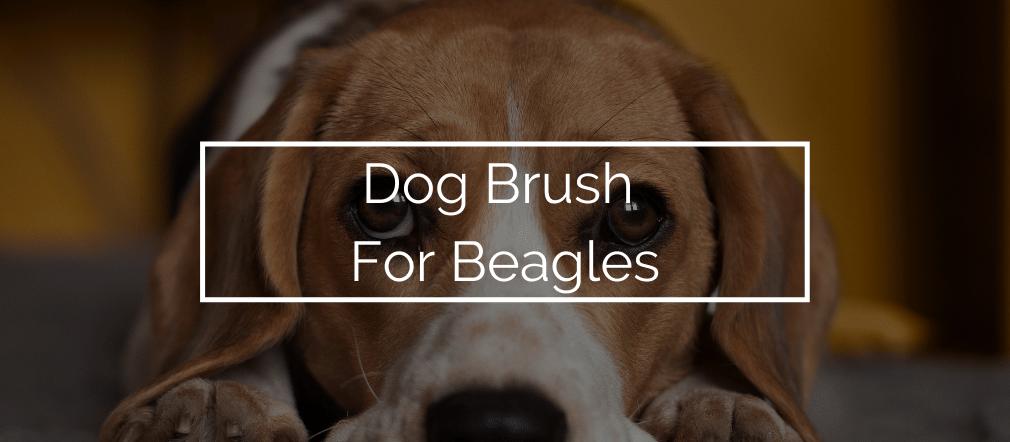 Dog Brush For Beagles