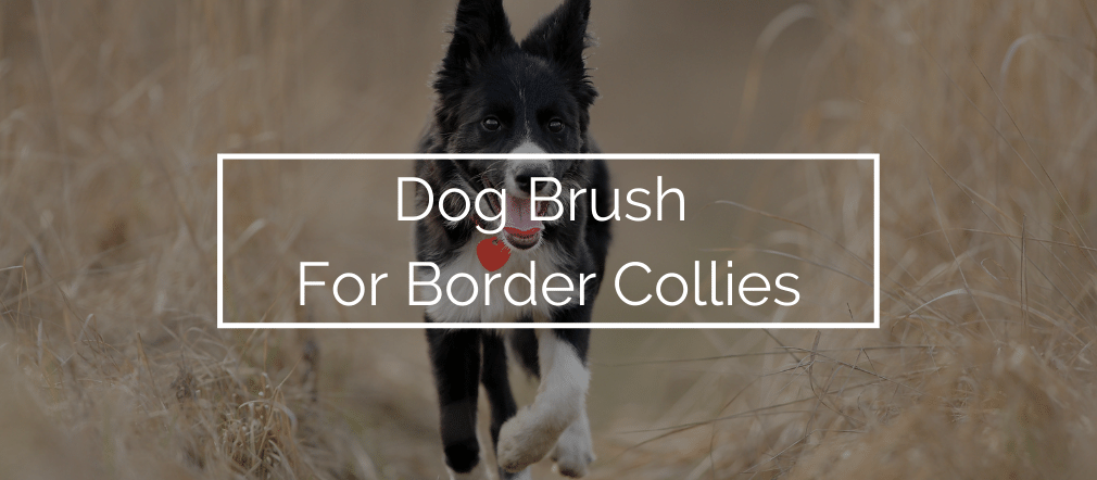 Dog Brush For Border Collies