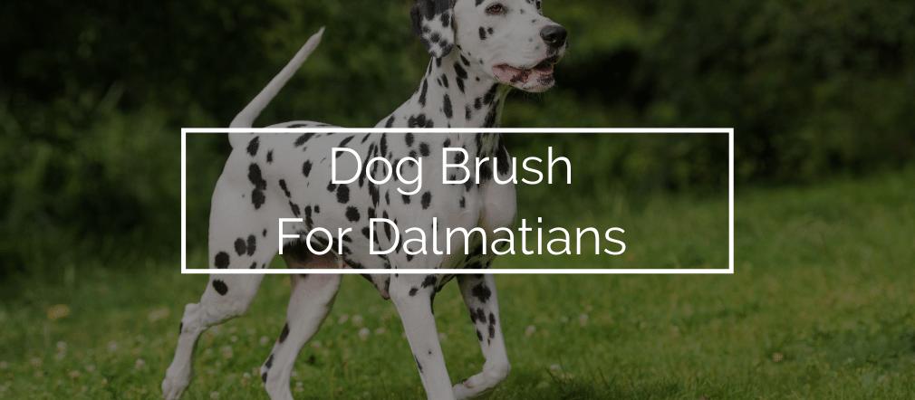 Dog Brush For Dalmatians
