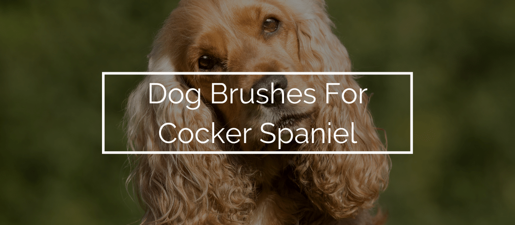 Dog Brushes For Cocker Spaniel