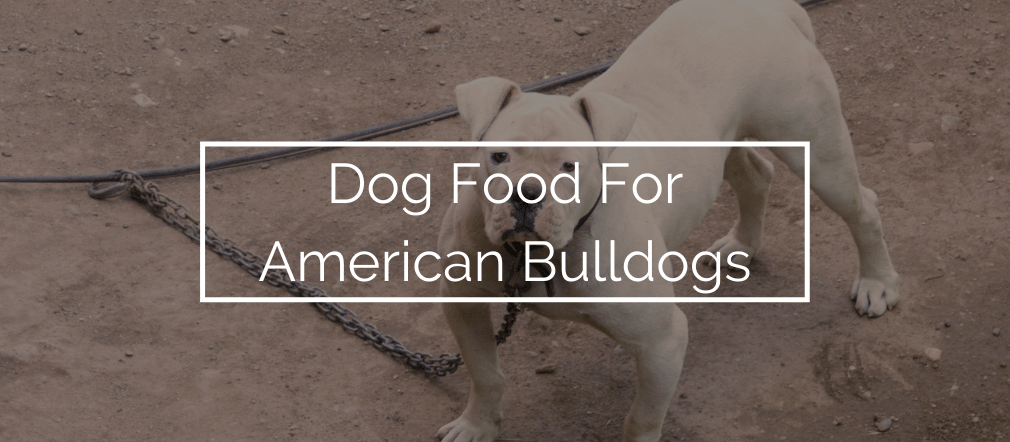 Dog Food For American Bulldogs