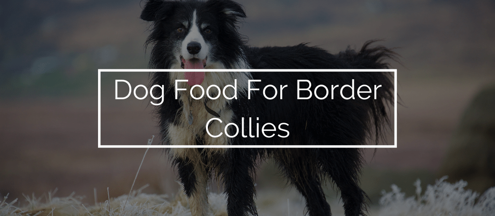Dog Food For Border Collies