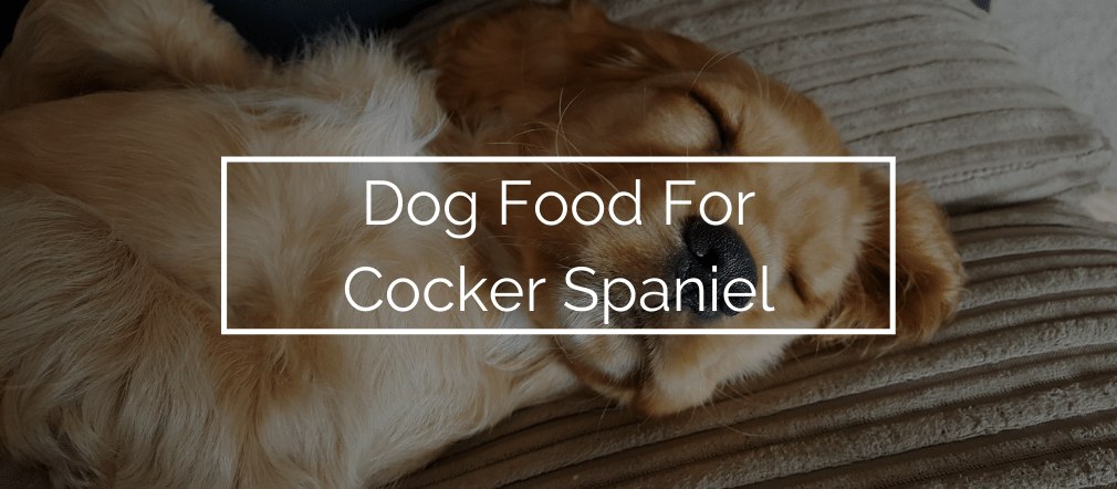 Dog Food For Cocker Spaniel