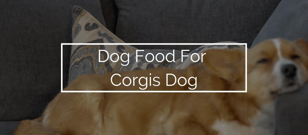 Dog Food For Corgis Dog
