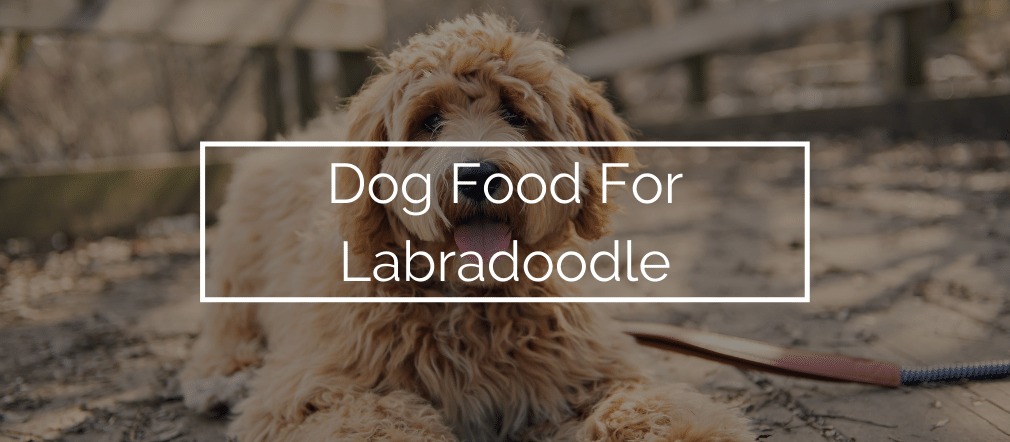 Dog Food For Labradoodle