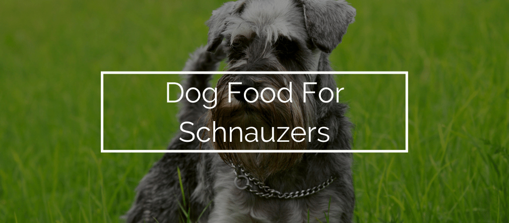 Dog Food For Schnauzers