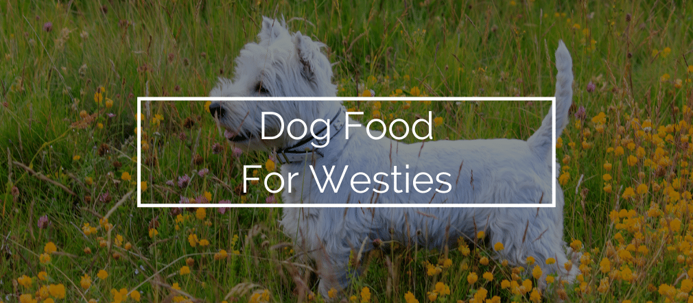 Dog Food For Westies