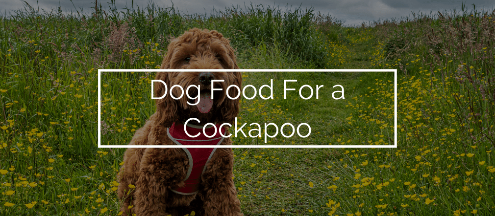 Dog Food For a Cockapoo