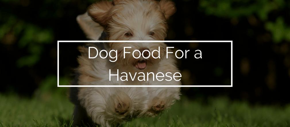 dog food for havanese